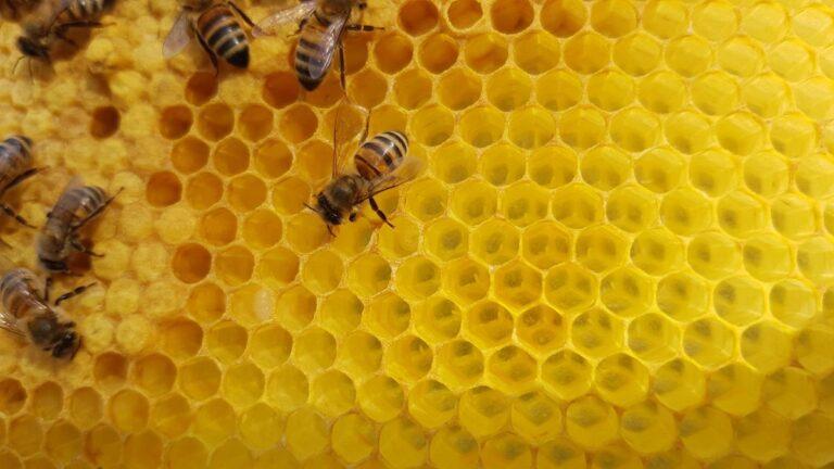Une ruche en primaire